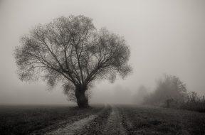 tree-3153571_1280_pixabay